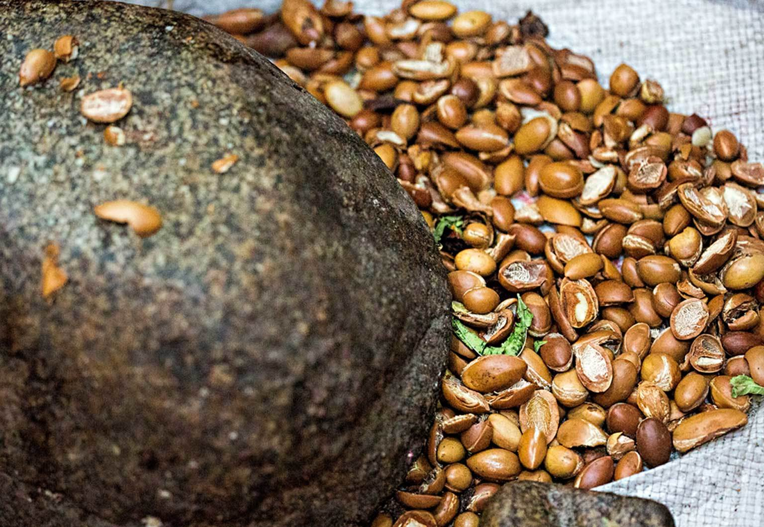 Image of Argan seeds - which comes from the Arganier spinosa tree.