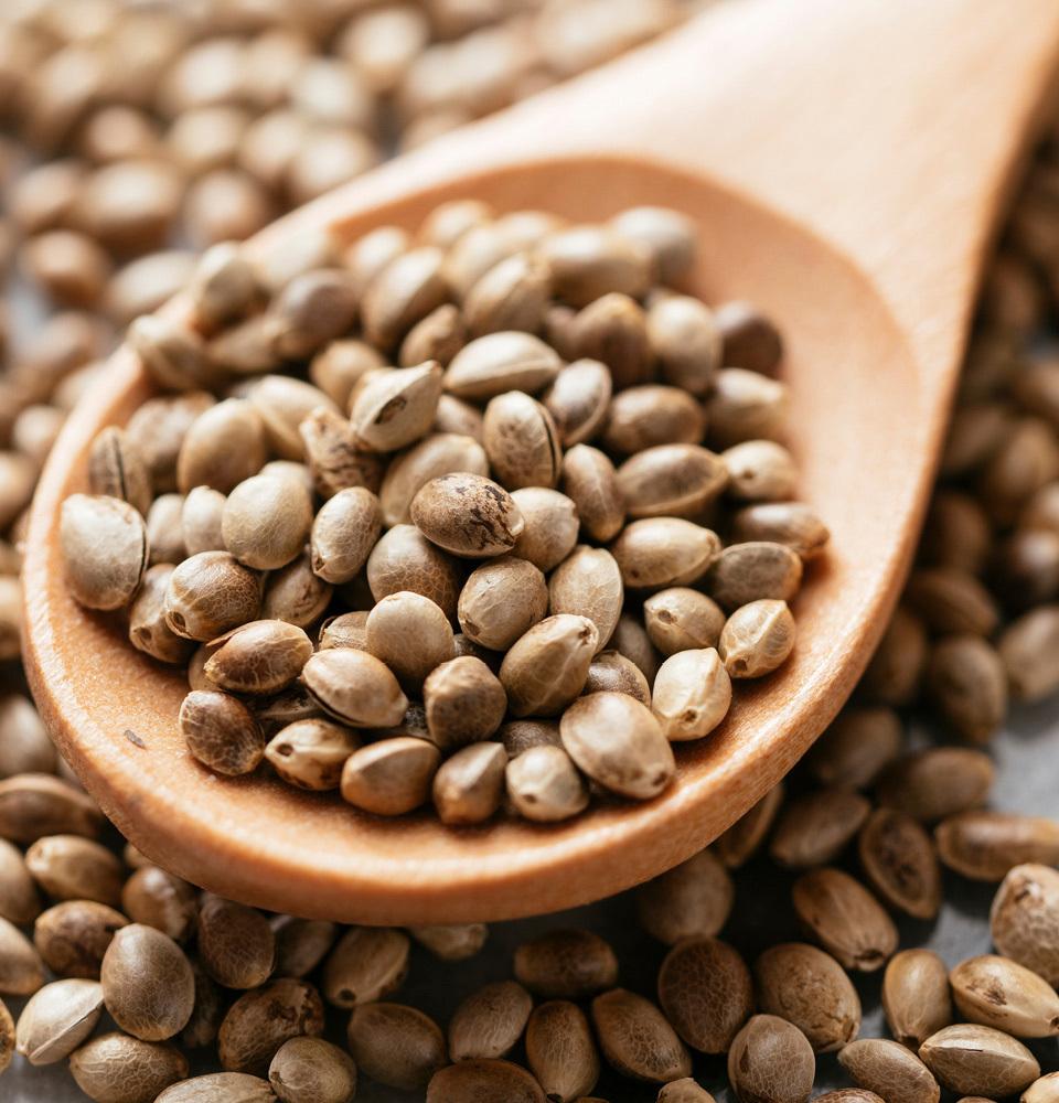 Hemp seeds, the source of Swisse Skincare hemp seed oil
